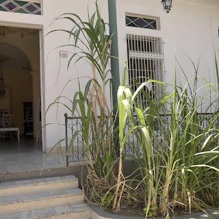 Santiago de Cuba, Museo de Ron. Ausschnitt mit Blick in die Tür auf alte Möbel, vergitterte Fenster, Zuckerrohrstauden.