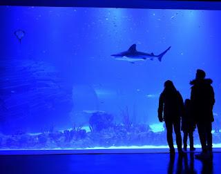 Tanque de tiburones