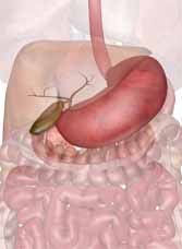The human stomach