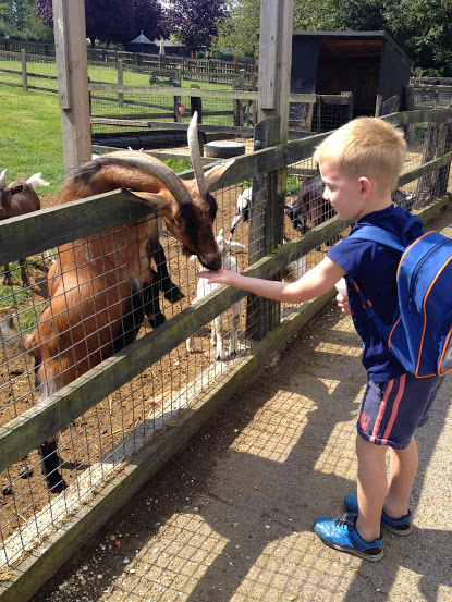 woodside animal farm feeding a goat