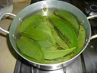 umumnya dikenal nama latin daun salam yaitu  21 Manfaat Daun Salam Untuk Menurunkan Berat Badan, Asam Efek Samping & Cara Merebus