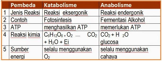 Jelaskan perbedaan reaksi anabolisme dengan katabolisme dan sebutkan masing-masing contohnya.