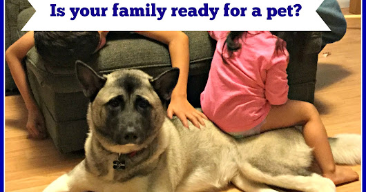 Is your family ready for a pet?