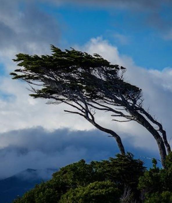 ...clovis roberto ambiente de leitura carlos romero tempestade vento mitologia deuses dos ventos