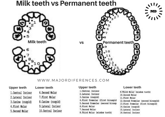 MILK TEETH VS PERMANENT TEETH