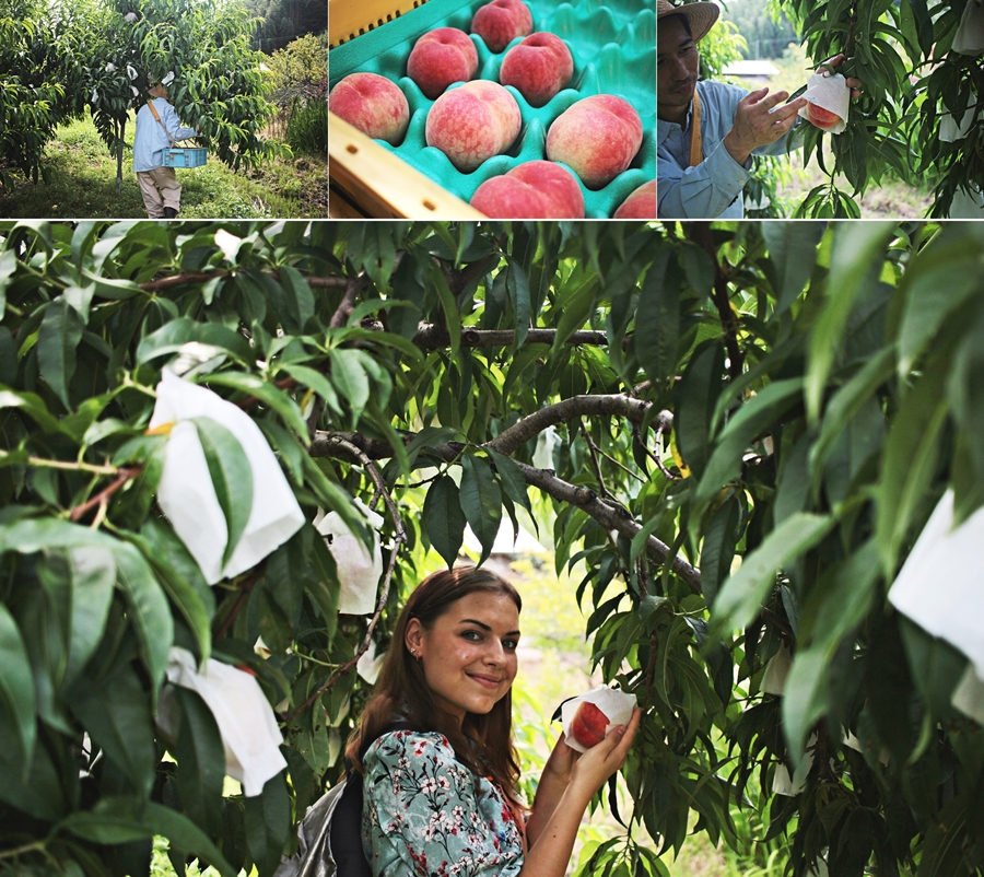 peach farm japan tourist