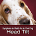 Symptoms to Watch for in Your Dog: Head Tilt