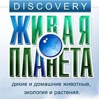 Картинки по запросу картинки discovery живая планета