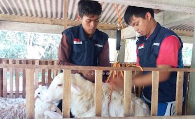 Quality kontrol hewan qurban solopeduli