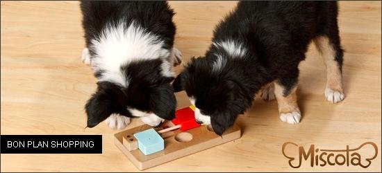 Rares sont les deals Groupon qui peuvent profiter à nos chiens, mais en ce  jour de 1er mai, la chance nous sourit ! (  351c2f8b8eab