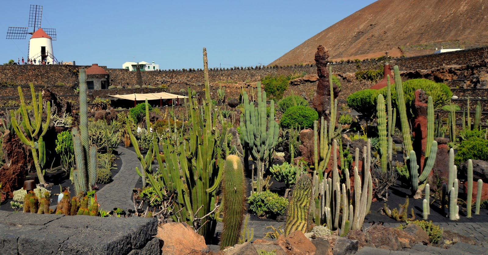 camino de letras con syra jard n de cactus en lanzarote. Black Bedroom Furniture Sets. Home Design Ideas