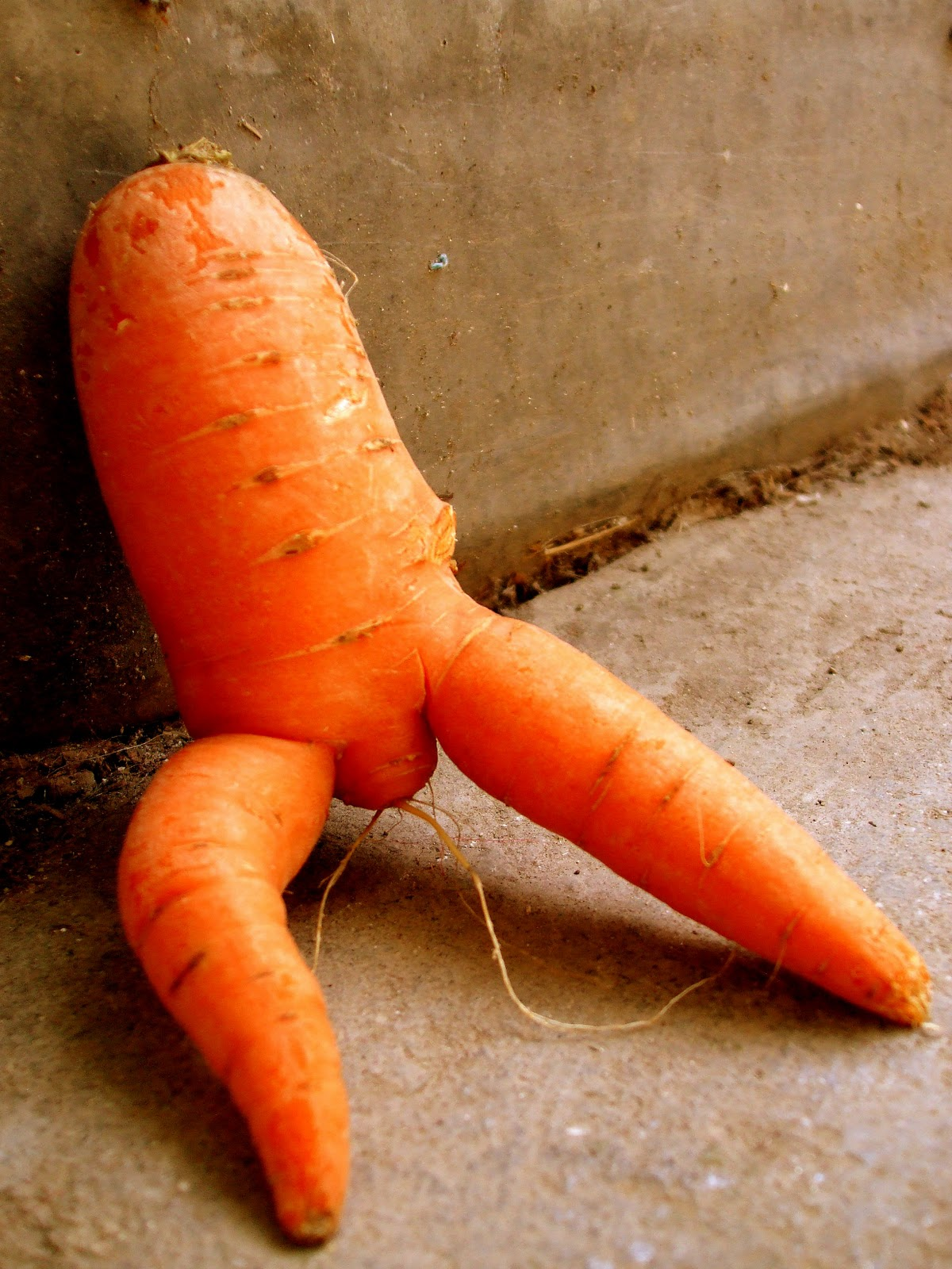 Latest Funny Pictures Funny Carrots