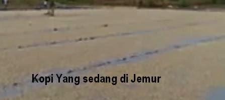 Kopi Nauli Sumatera Utara