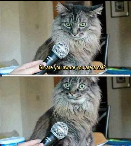 Funny Cat Interview Meme Joke Picture - Sir are you aware you are a cat?