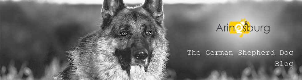 Ultimate German Shepherd Guide - Puppies Behavior Study, Raising & Training GSD Dog