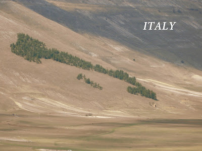 umbria italy made by trees