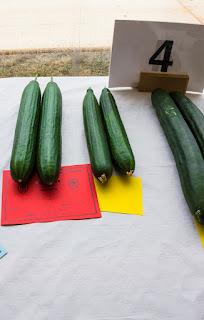 prize-winning cucumbers