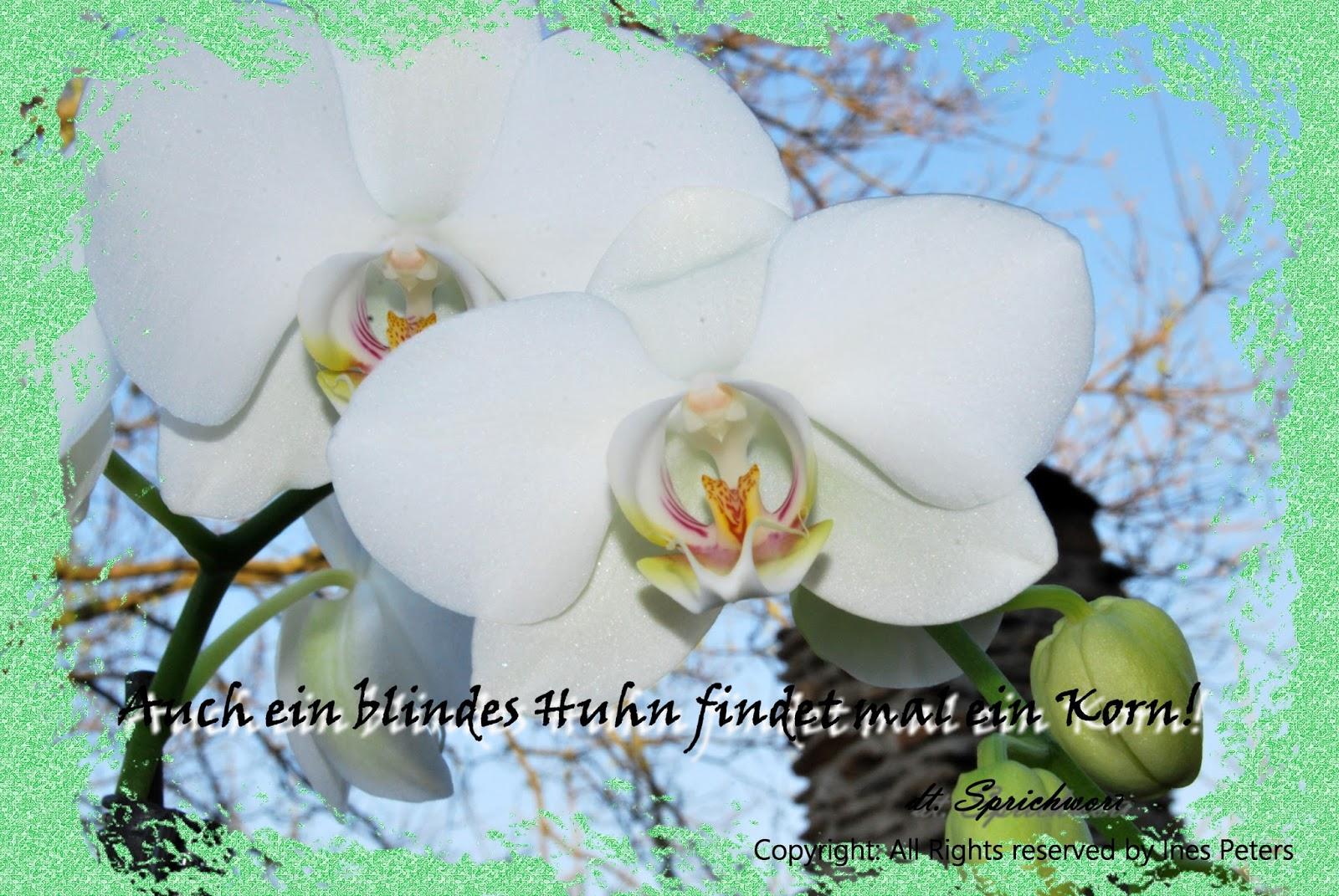 Fotos Sprüche Und Mehr Spruch Für Den 08032018