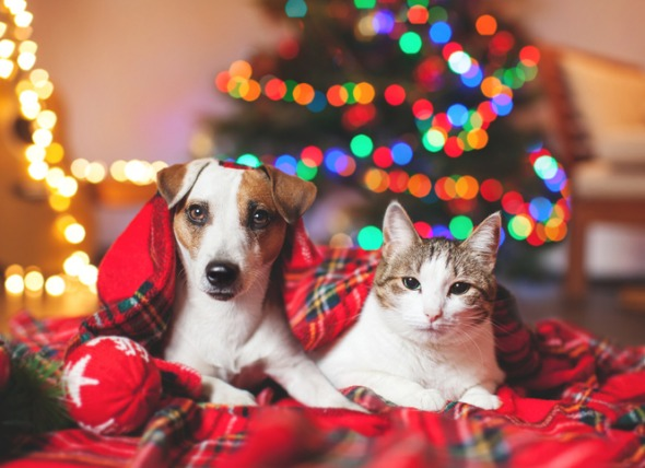 10 Pet Safety Tips for the Holidays