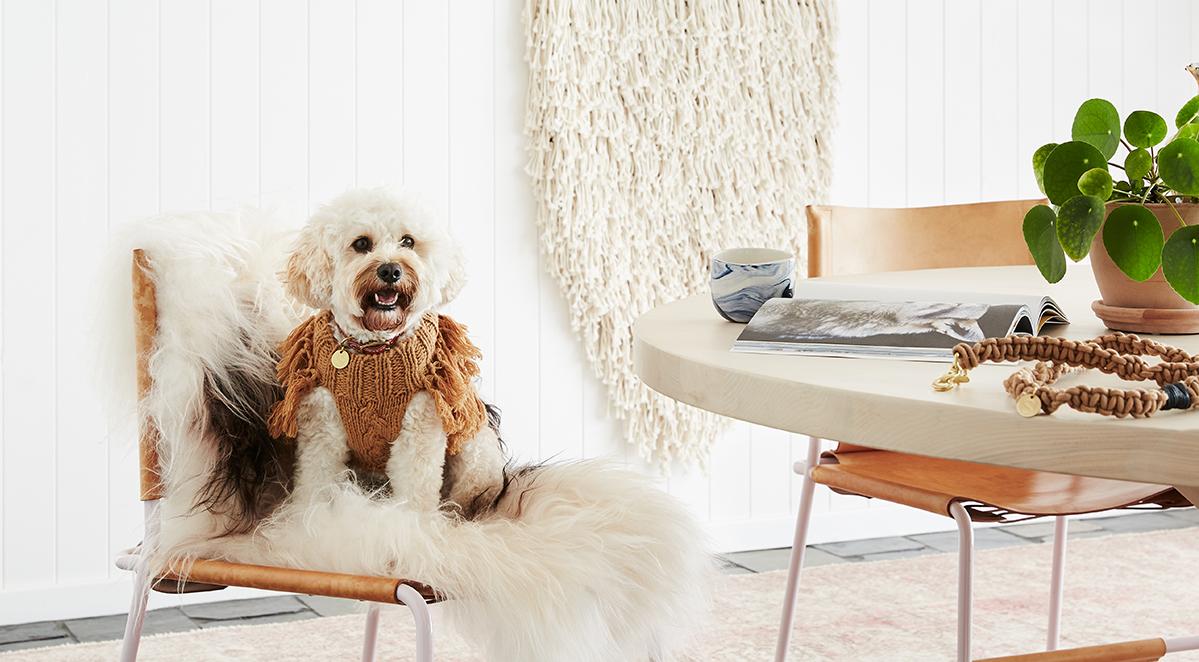 Autumn 2018 Dog Fashion Look Book | Australian Dog Lover