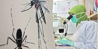 Virus zika merupakan virus yang terbilang gres dikenal oleh masyarakat Waspada! Virus Zika di Indonesia