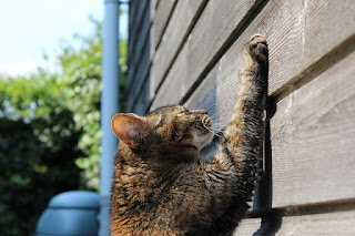 Find Out 6 Cat Behaviors and What They Mean