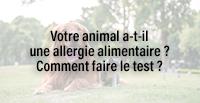 Votre animal a-t-il une allergie alimentaire ? Comment faire le test ?