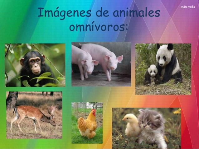 Imágenes Animales Omnívoros