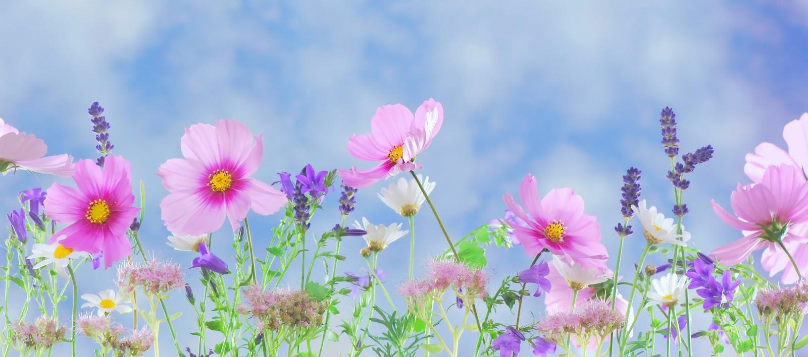 ピンクの野生の花