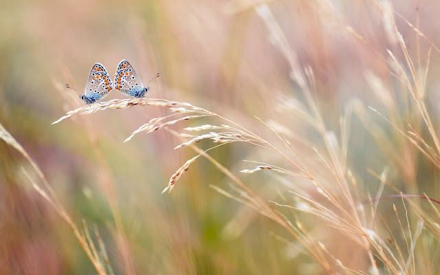 Foto van twee prachtige vlinders op een stengel