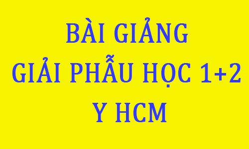 giáo trình giải phẫu học pdf đại học y dược thành phố hồ chí minh