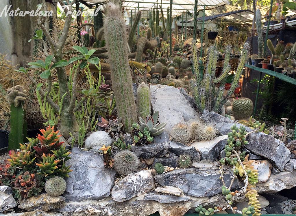 otro ejemplo de un desierto decorativo