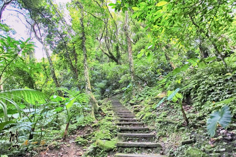 螢火蟲、油桐花、季高緯度熱帶雨林|三峽 大板根森林溫泉渡假村