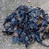 Ratusan Kelelawar Australia Mati Terpanggang, Pasalnya Karena Gelombang Panas