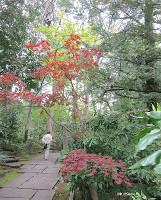 garden, April, Tokyo Japan