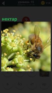 на цветках находится пчела, которая собирает нектар и несет его в улей