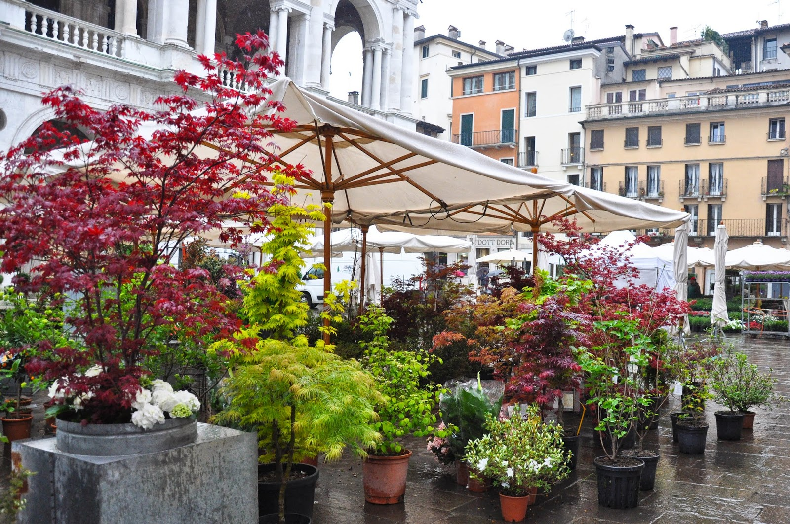 Potted plants at the Flower Exhibition at Piazza dei Signori in Vicenza, Italy