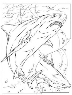 Megalodon Sharks Coloring Sheet Images