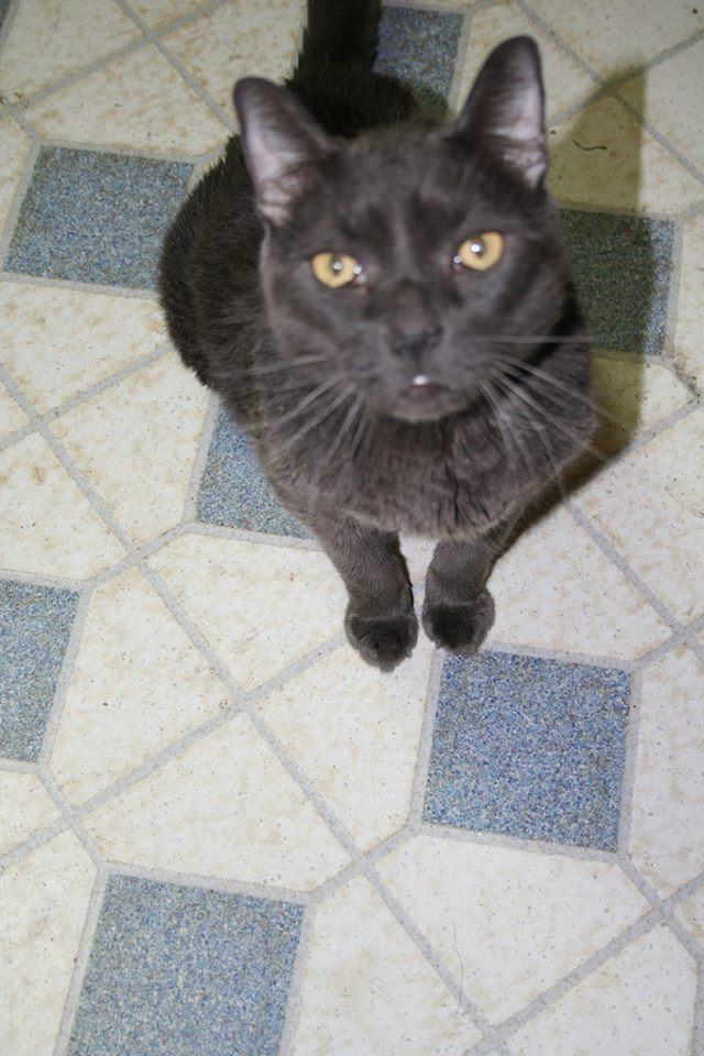 Smokey Cat Eye Makeup: Diabetic Cats In Need: Rest Peacefully, Smokey