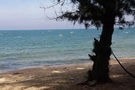 Thông và biển. Chùm thơ về biển