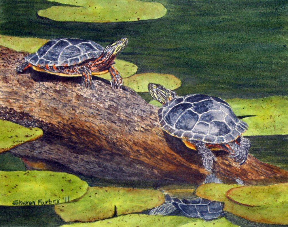 Painted turtles as pets