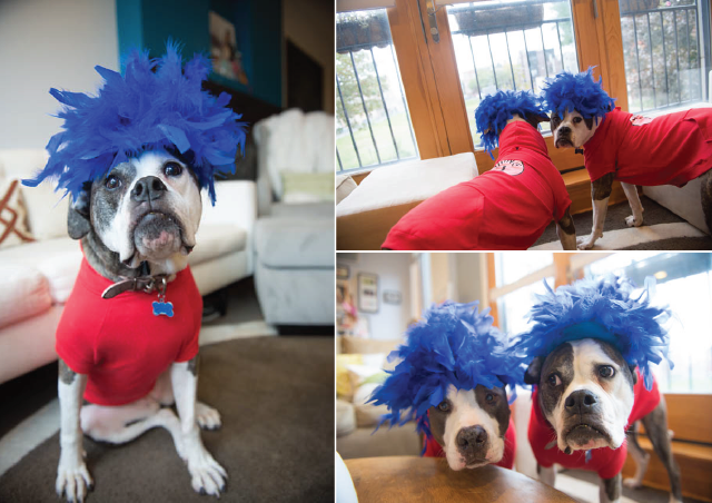 Two Pitties in the City: Halloween Costume Guide: Using ...