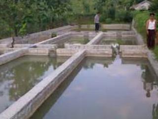 Kolam Beton Budidaya Ikan Nila