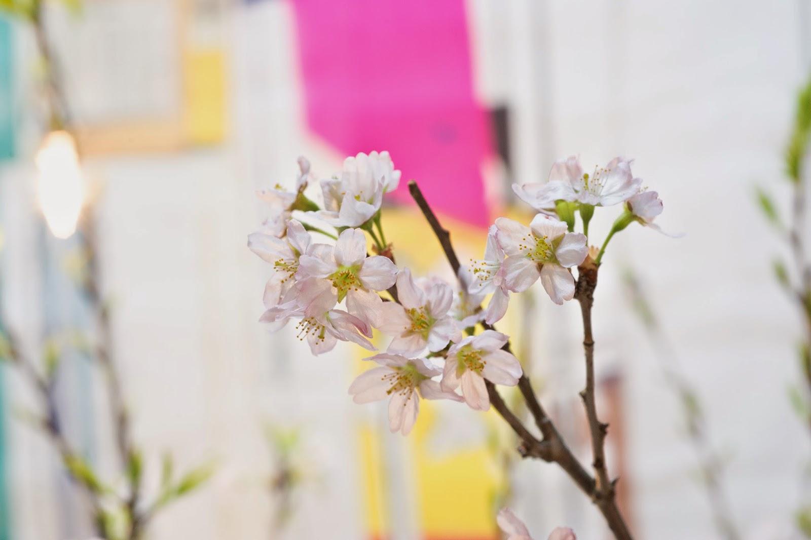 表参道SHOPの桜