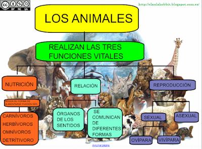 ¿Cuales son las Funciones de los animales?