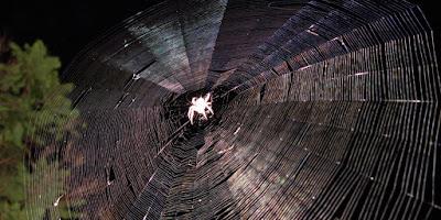 Darwin Örümceği, Kevlar