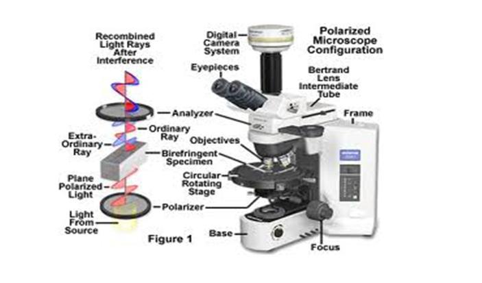 Polarized Light Microscopy