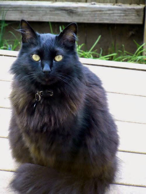 Here Is A Consumer Report From Jinx The Cat On Lala Land Snazzy Rat Model Originally Las Vegas Nevada Now Resides In Monmouth Oregon