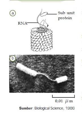 Mengenal Pengertian Virus,Ciri dan Struktur Virus, Reproduksi Virus, KLasifikasi dan Manfaat Virus bagi Manusia