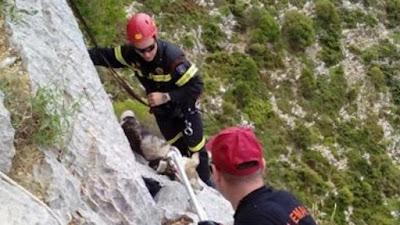 Τραυματίστηκε πυροσβέστης, στην προσπάθεια του να διασώσει κυνηγετικό σκύλο